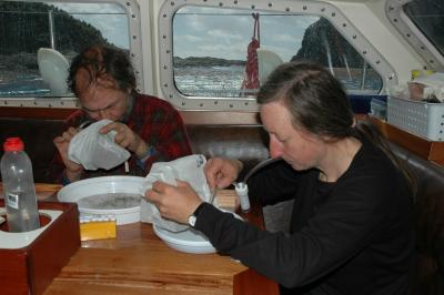 roger rosy key working aboard yacht seal sorting invertebrates