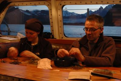 Marie Briggs and Stuart Cable sorting through seeds of Rostkovia magellanica for the Millennium Seed`Bank Project.
